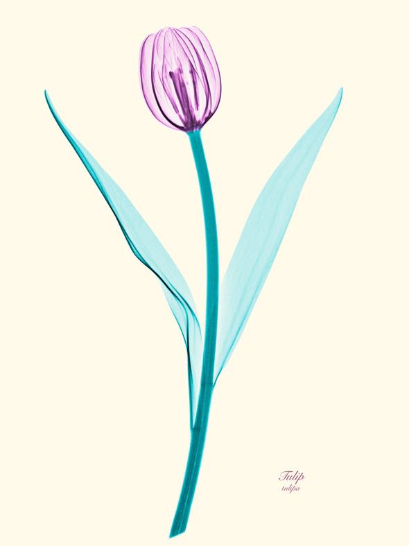 , Brendan Fitzpatrick Photographies : Des Fleurs aux Rayons X