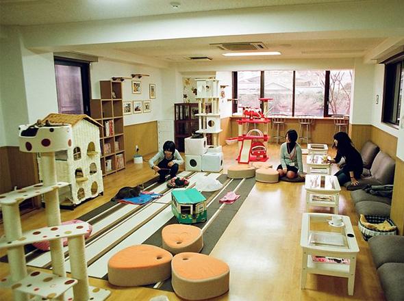 cat cafe chat japon tokyo 1 Cafe Neko No Mise : Le Café des Chats à Tokyo