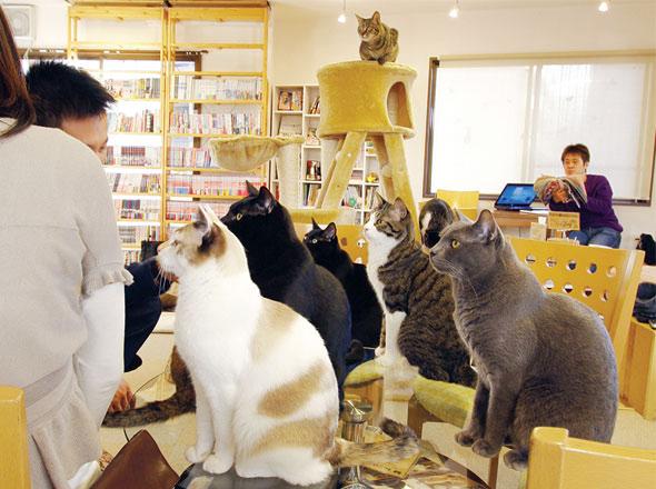 , Cafe Neko No Mise : Le Café des Chats à Tokyo