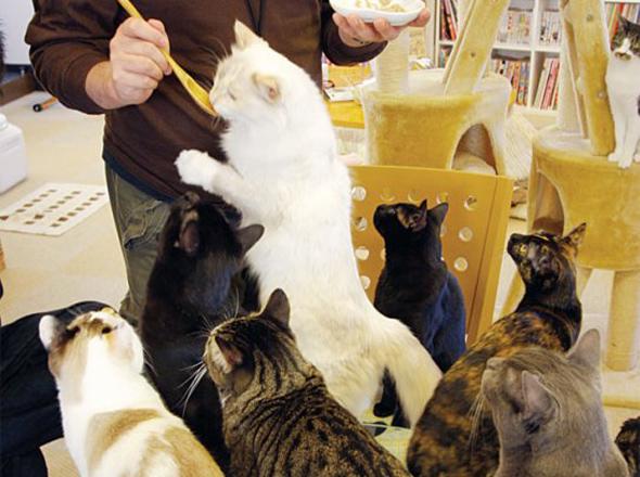 cat cafe chat japon tokyo 5 Cafe Neko No Mise : Le Café des Chats à Tokyo