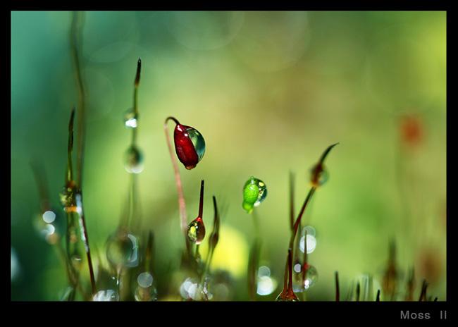 , Sharon Johnstone Photographies : Merveilleuse Nature en Macro