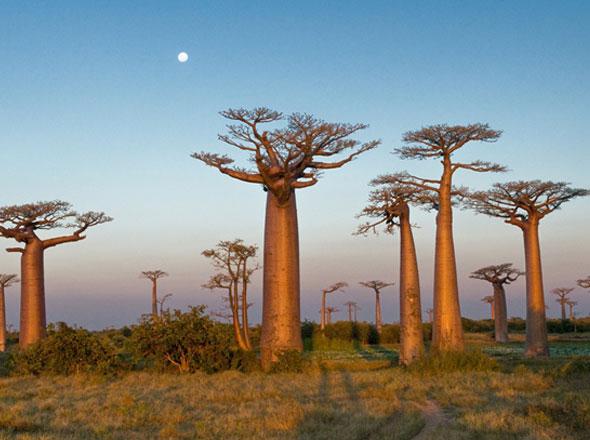 , Les Joyaux de Madagascar : Huiles Essentielles Bio