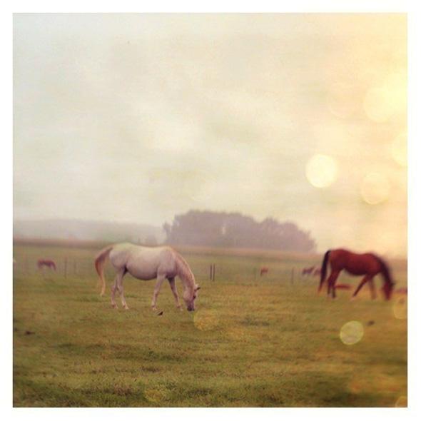 , Entre Ciel et Mer Photographies par Alicia Bock