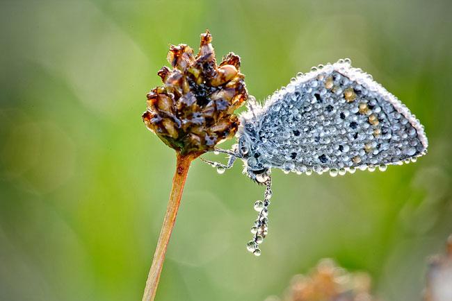 , Macro Photographie par David Chambon : Insectes scintillants de Rosée