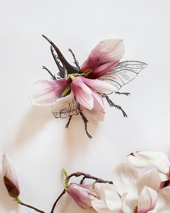 , Kari Herer Photographie : Compositions Florales Illustrées