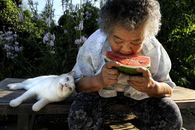 10 Chat Fukumaru et Misao la Grand Mere Fukumaru le Chat et Misao la Grand Mere des Amis pour la Vie