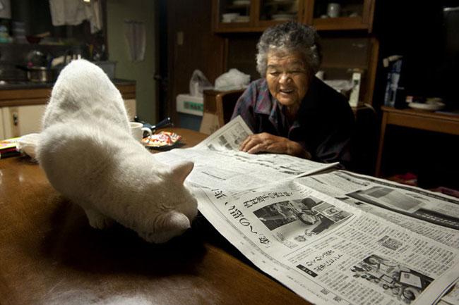18 Chat Fukumaru et Misao la Grand Mere Fukumaru le Chat et Misao la Grand Mere des Amis pour la Vie
