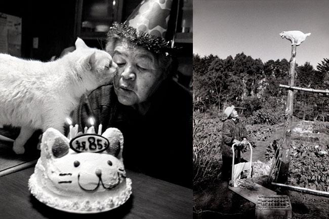 8 Chat Fukumaru et Misao la Grand Mere Fukumaru le Chat et Misao la Grand Mere des Amis pour la Vie