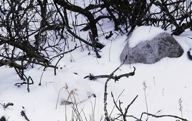 , ArtWolfe Photographie : Des Animaux Naturellement Invisibles