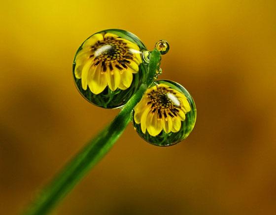macro fleurs, Photo Macro de Gouttelettes en Fleurs par Alistair Campbell