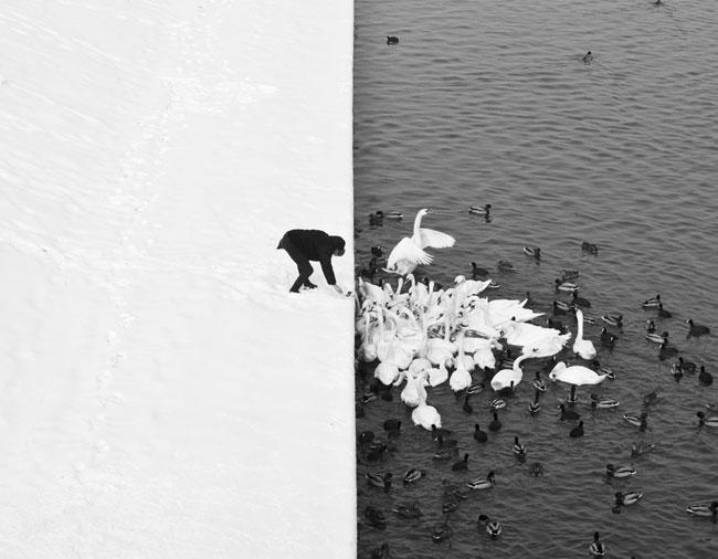 , Un Homme au Lac des Cygnes : Symphonie en Noir et Blanc