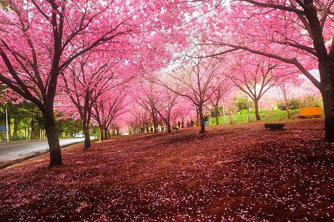 """Résultat de recherche d'images pour """"japon au printemps"""""""