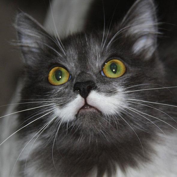 """Résultat de recherche d'images pour """"images chat + moustache"""""""