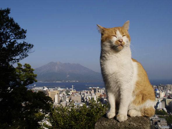, Photographies par Mitsuaki Iwago : Portraits de Chats Autour du Monde