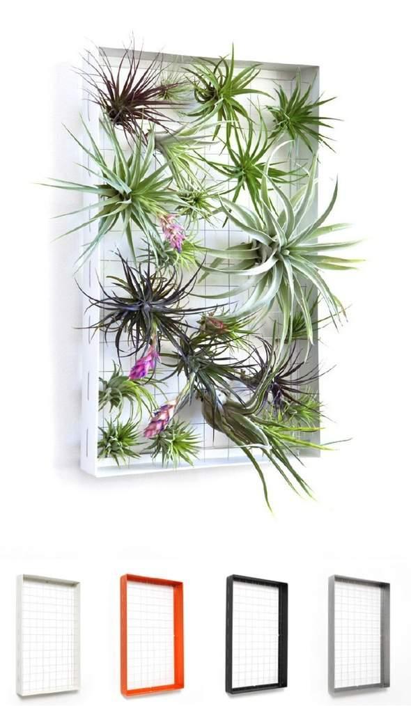 Airplantman Frame Mini Jardins Verticaux Plantes Vertes 01 - Airplantman Mini Jardins Verticaux pour Plantes Vertes à Créer