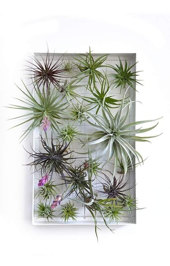 Airplantman-Frame-Mini-Jardins-Verticaux-Plantes-Vertes-02