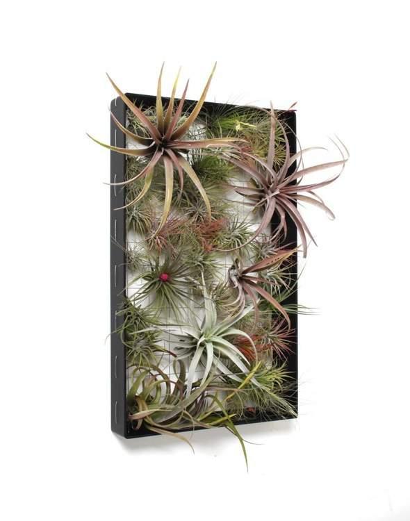 Airplantman-Frame-Mini-Jardins-Verticaux-Plantes-Vertes-04