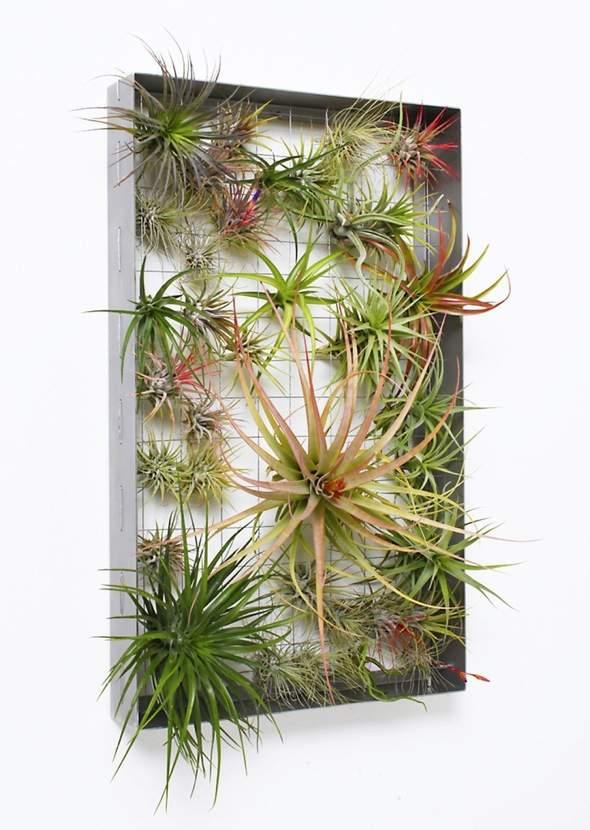 Airplantman Frame Mini Jardins Verticaux Plantes Vertes 05 - Airplantman Mini Jardins Verticaux pour Plantes Vertes à Créer