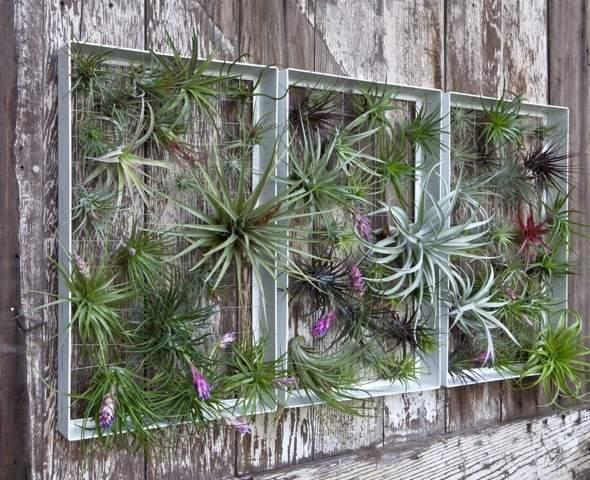 Airplantman Frame Mini Jardins Verticaux Plantes Vertes 06 - Airplantman Mini Jardins Verticaux pour Plantes Vertes à Créer