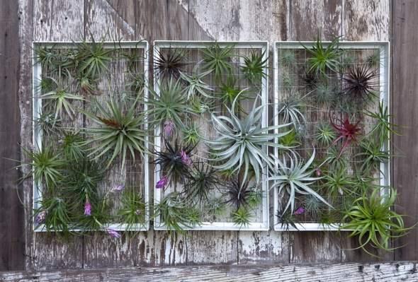 Airplantman Frame Mini Jardins Verticaux Plantes Vertes 07 - Airplantman Mini Jardins Verticaux pour Plantes Vertes à Créer