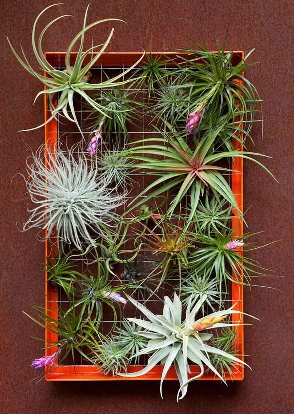 Airplantman-Frame-Mini-Jardins-Verticaux-Plantes-Vertes-09