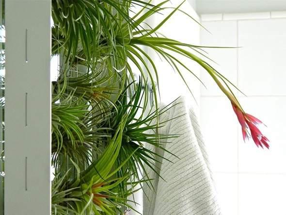 Airplantman Frame Mini Jardins Verticaux Plantes Vertes 12 - Airplantman Mini Jardins Verticaux pour Plantes Vertes à Créer