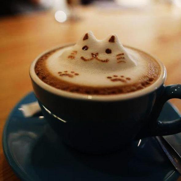 , KitTea Café à San Francisco Du Thé, des Chats, un Havre de Sérénité