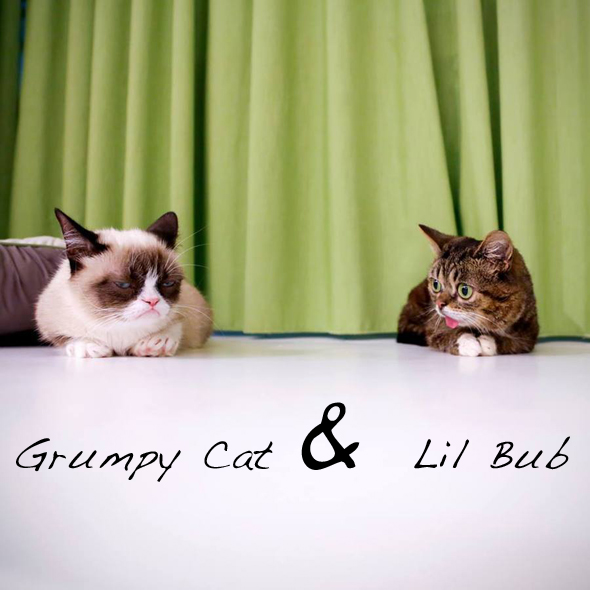 Grumpy-Cat-Lil-Bub-Rencontre-Meet-1