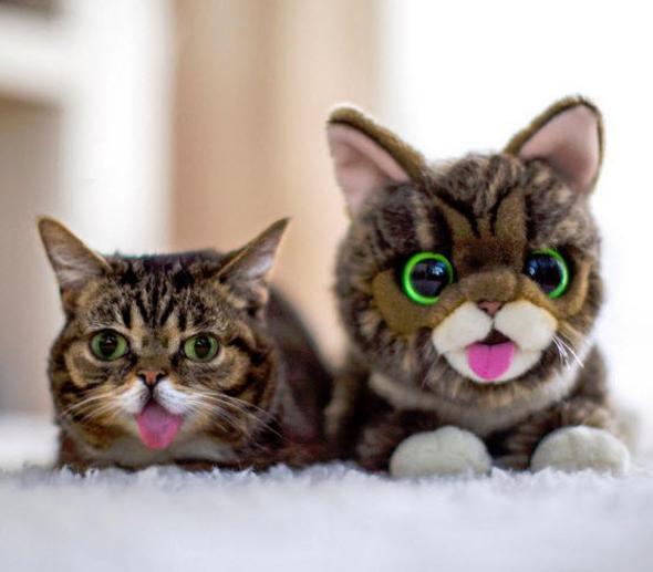 Grumpy-Cat-Peluche-Lil-Bub-Rencontre-Meet-2