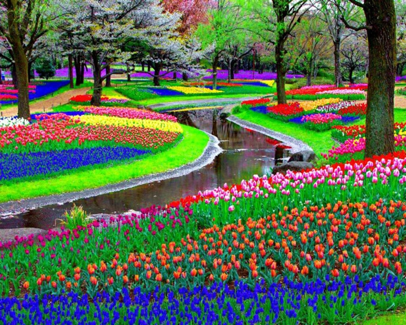 Keukenhof Pays-Bas : Le plus grand Jardin de Fleurs de ...