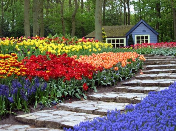 Photos Fleurs de jardin - Visoflora