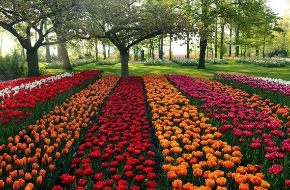 Le Jardin De Fleurs | Idées décoration - Idées décoration