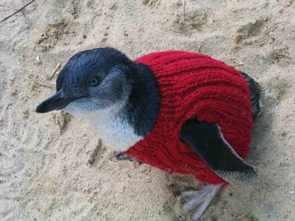 Australie-Pulls-Sauver-Pingouin-Manchots-Tricot-2