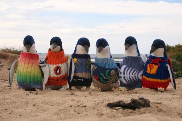 Australie-Pulls-Sauver-Pingouin-Manchots-Tricot-4