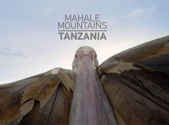 Tanzanie-Pelican-Vol-GoPro-Greystoke-Mahale-1