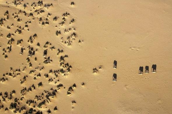 animaux-sauvage-afrique-vue-ciel-michael-poliza-photographie-00