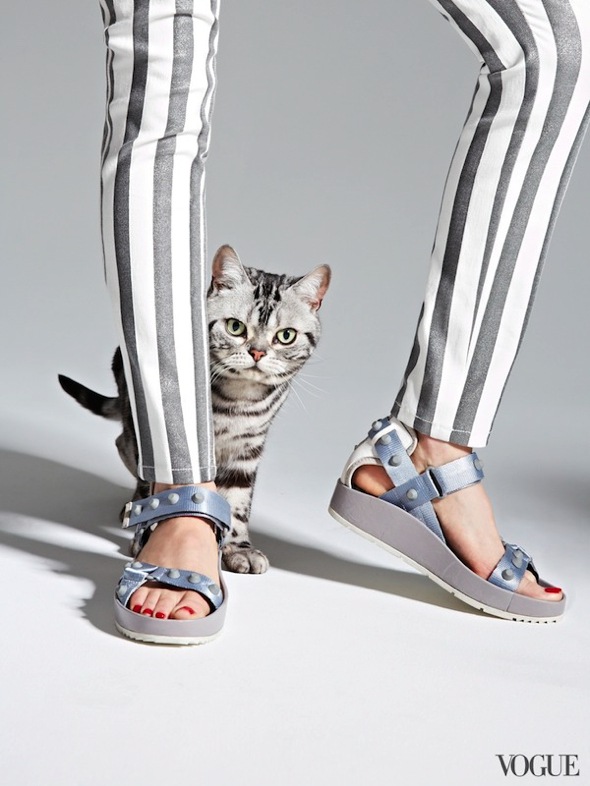 chats-chaussures-luxe-photographie-femme-vogue-00
