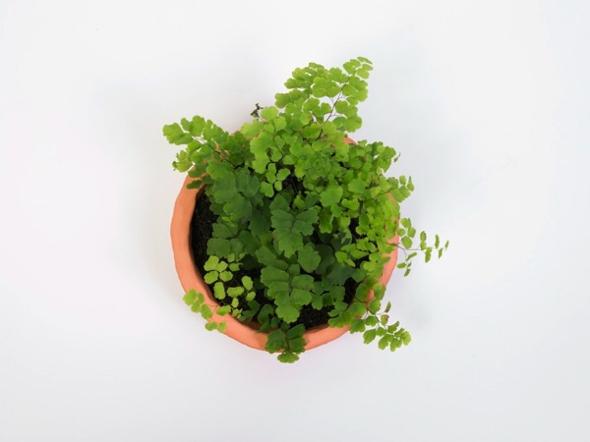 , Véritables Plantes Vertes en Pots Alphabet pour une Mise en Page Creative !