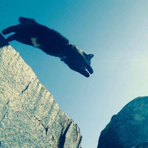, Millie le Chat Adopté et Craig Armstrong, un Duo de Grimpeurs Hors Pair !