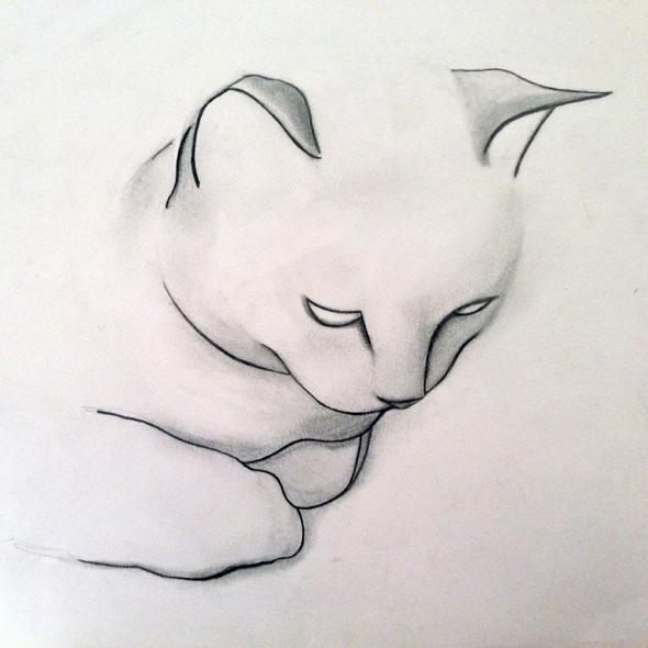 kellas-campbell-fusain-chats-dessin-01