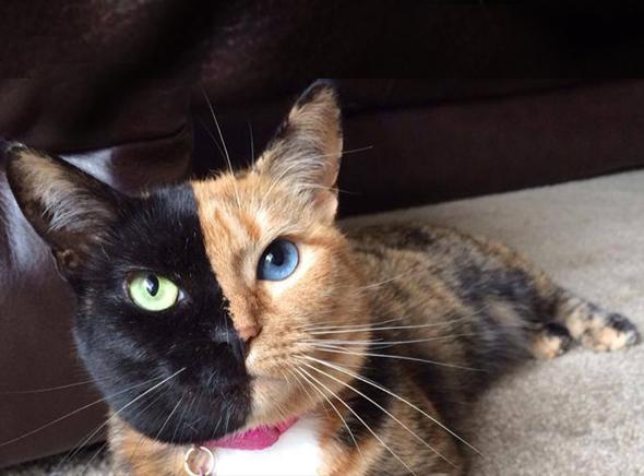 éjaculation dans gros poilu ébène chatte