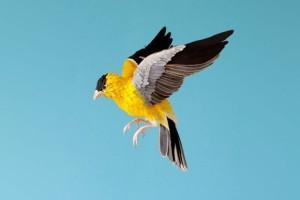 diana-beltran-herrera-sculpture-papier-oiseaux-00