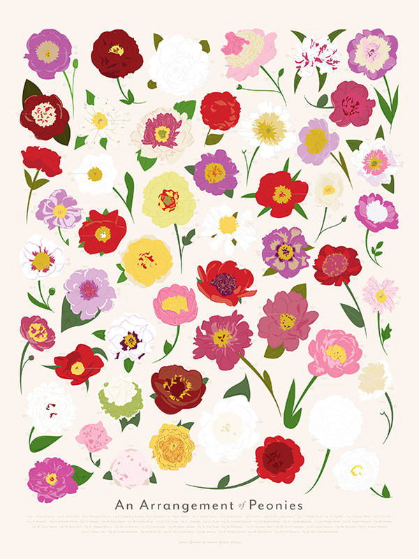 , Illustrations Hautes en Couleur de Roses, Pivoines, Tulipes et Tournesols