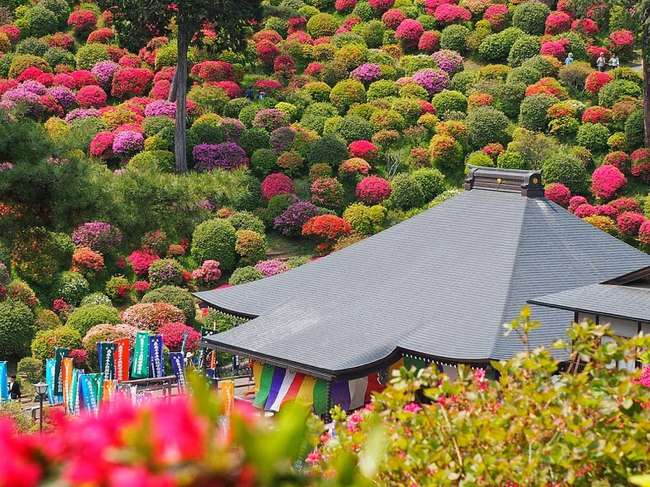 shiofune kannon ji ome japon foret azalees 04 - Foret d'Azalées aux Couleurs Eclatantes de Shiofune Kannon-Ji au Japon
