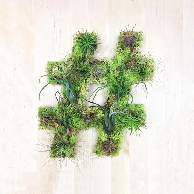 , Typographie Décorative Murale Faite de Plantes et de Mousse