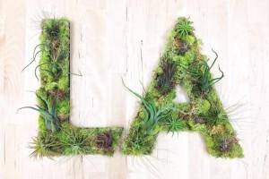 terrarium-plante-typographie-murale-5