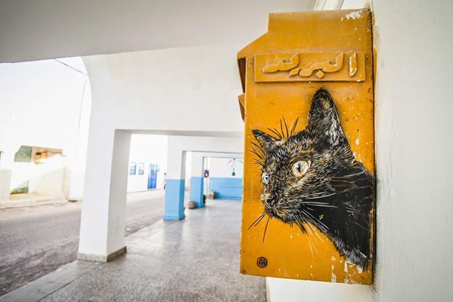 , Les Chats envahissent les Murs de Djerba en Tunisie