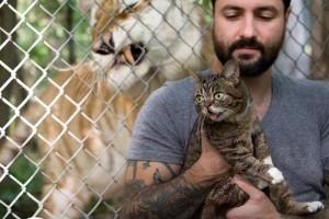 greenpeace-cats-save-tigers-chat-lil-bub-9