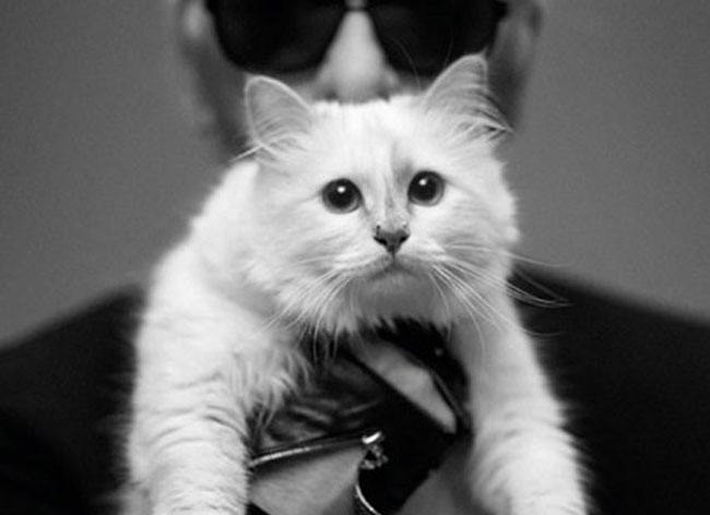 Choupette-Chat-Karl-Lagerfeld-Collection-Sac-Chaussure-1