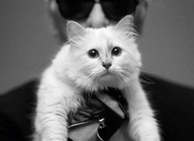 Choupette, Choupette le Chat de Karl Lagerfeld a ses Accessoires